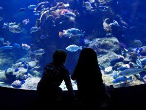 Visit Skegness Aquarium